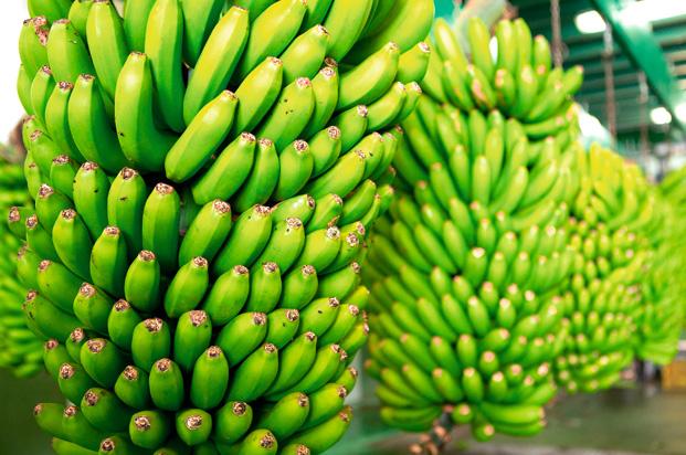 bananera8
